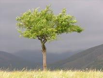 Árbol solo Fotos de archivo libres de regalías