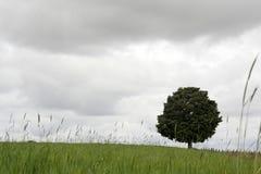 Árbol solo Fotos de archivo