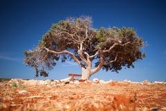 Árbol solo Foto de archivo libre de regalías