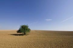 Árbol solo Fotografía de archivo