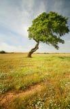 Árbol solo Imagenes de archivo