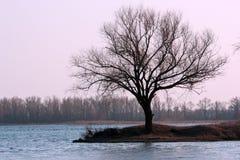 Árbol solo Imagen de archivo