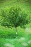 Árbol solo Foto de archivo