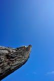 Árbol solo bajo el cielo azul Foto de archivo libre de regalías