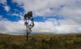 Árbol solo cerca de la carretera de Mamalahoa imagen de archivo libre de regalías