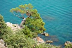 Árbol solo cerca del mar Fotos de archivo libres de regalías
