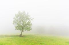 Árbol solo con la luz y la niebla hermosas Imagenes de archivo