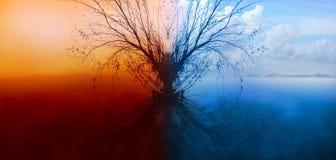 Árbol solo con la reflexión en agua foto de archivo