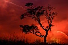 Árbol solo con puesta del sol llamativa Imagen de archivo