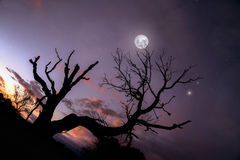 Árbol solo debajo del cielo nocturno azul con la luna y las estrellas Foto de archivo libre de regalías