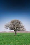 Árbol solo del árbol solo solo del árbol Fotografía de archivo