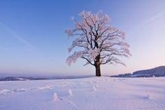 Árbol solo del invierno Fotos de archivo