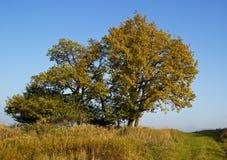 Árbol solo del otoño Fotos de archivo