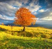 Árbol solo del otoño contra el cielo dramático en montañas Fotografía de archivo libre de regalías