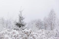 Árbol solo del pino (la Navidad) en prado congelado Invierno en Lithuani Foto de archivo