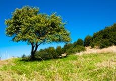 Árbol solo del verano Foto de archivo