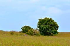 Árbol solo en campo Foto de archivo libre de regalías