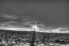 Árbol solo en campo de hierba Fotos de archivo libres de regalías
