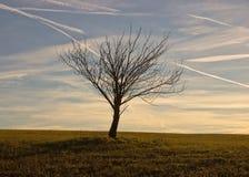 Árbol solo en campo de hierba Imagen de archivo libre de regalías