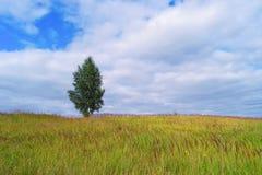 Árbol solo en campo de hierba Foto de archivo libre de regalías