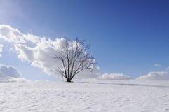 Árbol solo en campo del invierno Fotografía de archivo libre de regalías