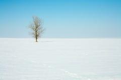 Árbol solo en campo del invierno Foto de archivo
