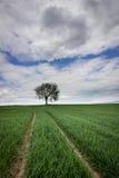 Árbol solo en campo del verde del resorte Foto de archivo libre de regalías