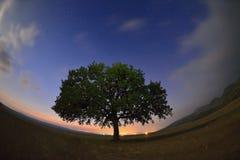 Árbol solo en campo en el amanecer Fotos de archivo