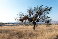 Árbol solo en campo en el amanecer Fotografía de archivo libre de regalías