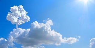 Árbol solo en cielo. Imagenes de archivo