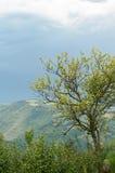Árbol solo en colinas brumosas Foto de archivo libre de regalías