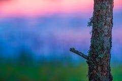 Árbol solo en colores Imágenes de archivo libres de regalías