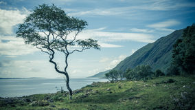 Árbol solo en costa Imágenes de archivo libres de regalías