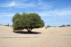 Árbol solo en desierto Fotografía de archivo