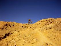 Árbol solo en desierto Imagen de archivo