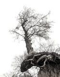Árbol solo en el borde de la roca Imagen de archivo libre de regalías