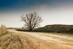Árbol solo en el camino Imagenes de archivo