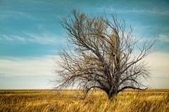 Árbol solo en el campo Imagenes de archivo