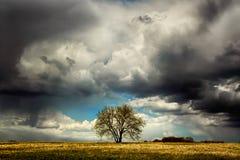 Árbol solo en el campo antes de una tempestad de truenos Foto de archivo libre de regalías