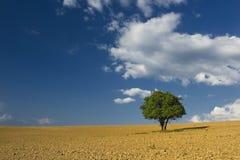 Árbol solo en el campo marrón con el cielo nublado azul Imágenes de archivo libres de regalías