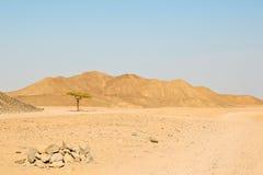 Árbol solo en el desierto Fotografía de archivo libre de regalías