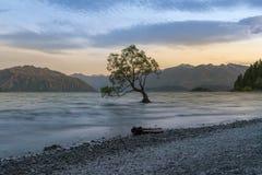 Árbol solo en el lago Wanaka durante puesta del sol, fotografía de archivo libre de regalías