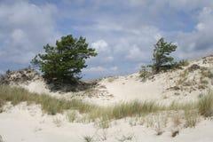 Árbol solo en el mar Báltico, Polonia imágenes de archivo libres de regalías