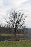 Árbol solo en el pantano Fotos de archivo libres de regalías