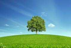 Árbol solo en el prado Fotografía de archivo libre de regalías
