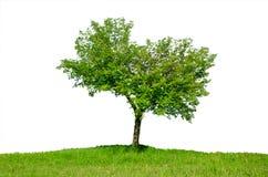 Árbol solo en el resorte Imágenes de archivo libres de regalías