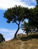 Árbol solo en Hungría foto de archivo libre de regalías