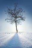 Árbol solo en invierno Foto de archivo libre de regalías
