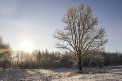 Árbol solo en invierno Fotos de archivo libres de regalías