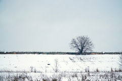Árbol solo en invierno Foto de archivo